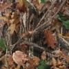 Stream & download Upper Echelon (feat. T.I. & 2 Chainz) - Single