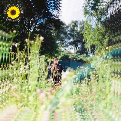 Sunflower - Single by Rex Orange County album reviews, ratings, credits